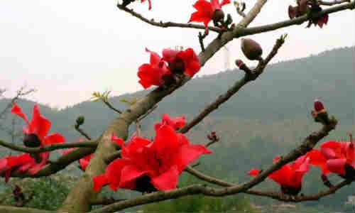 现代古诗歌赏析-刘桂军原创诗歌