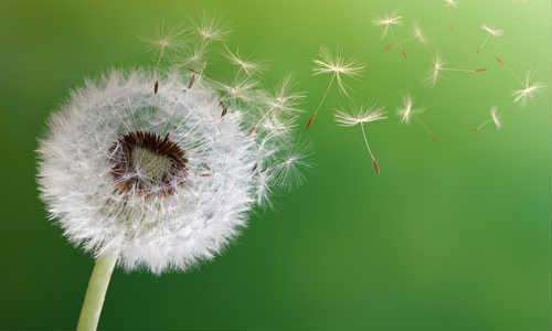 一粒种子的自由-原创诗歌