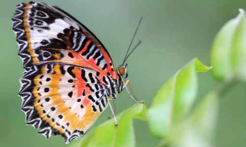 寻梦的蝴蝶-原创诗歌共享