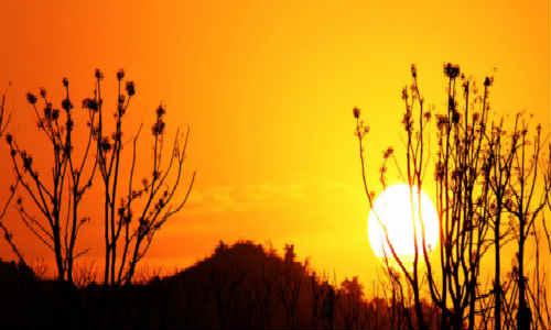 西川诗歌赏析_西川的诗-夕光中的蝙蝠