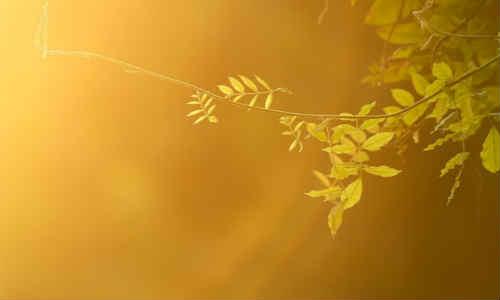 原创诗歌共享-诗梦苑(现代诗三首)