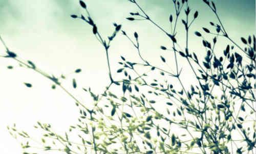 【禾子】的诗歌_原创诗歌