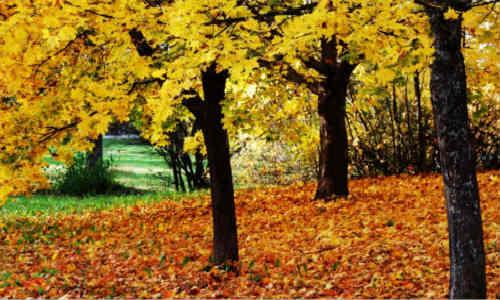 描写秋天的原创诗歌-初秋心语
