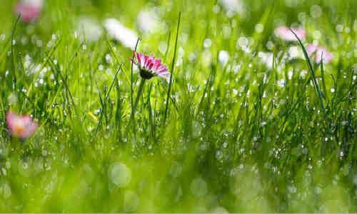 还记得孟浩然的春晓吗_ 赏析孟浩然诗歌代表作品