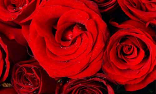 关于花朵的原创诗歌