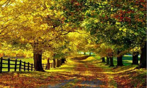 关于秋天的现代诗歌【贾红志】