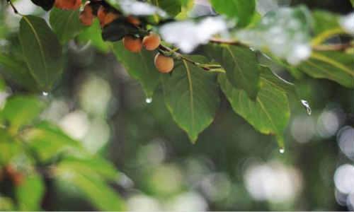 现代诗歌:秋天的足迹、秋天的雨