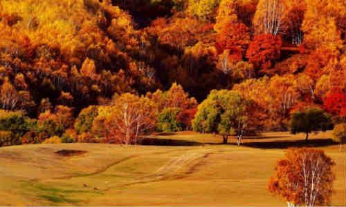 描写立秋、秋、秋天、秋意的现代诗歌