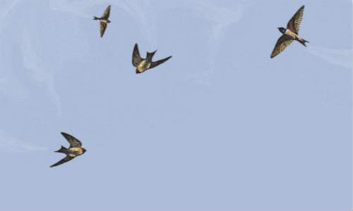 关于燕子、燕儿的现代原创诗歌【炫烷流星】
