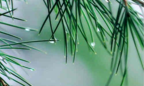 江南雨:现代诗歌听雨