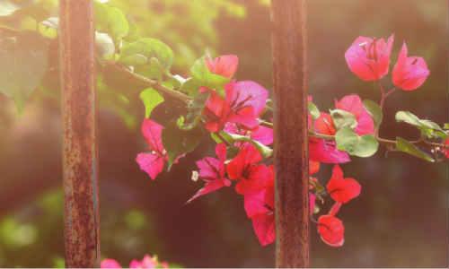 江南雨:现代诗歌追梦