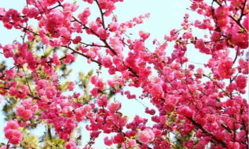 你和桃花-海子诗歌精选
