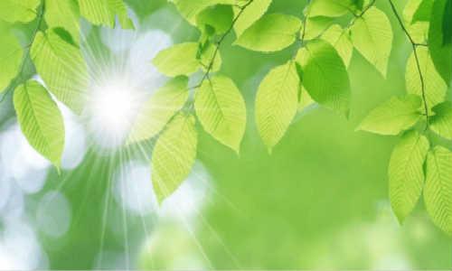不要问我那绿色是什么-海子诗歌精选