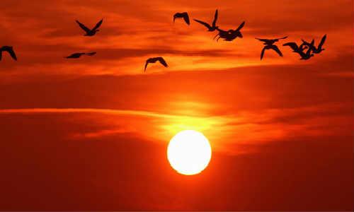 黎明和黄昏-海子诗歌精选