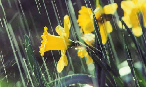 晨雨时光-海子诗歌精选
