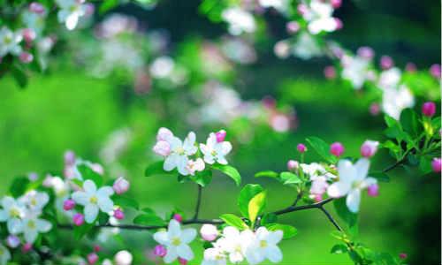 春天(断片)-海子诗歌精选