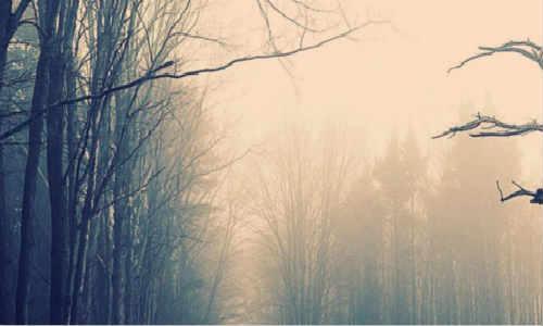 【愚者】现代散文诗词原创-孤寂