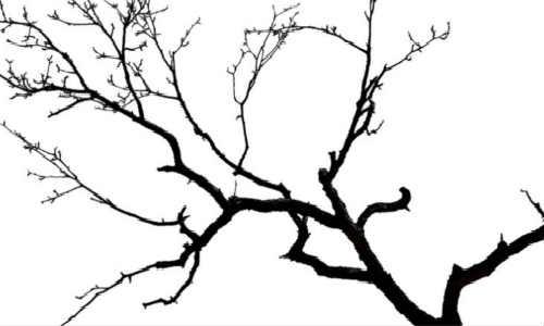 中午-海子诗歌精选