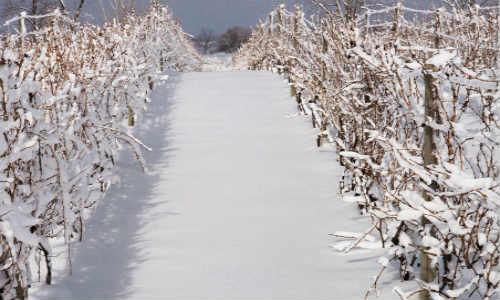 赞美冬天的现代诗歌-冬的美丽