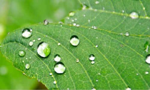 描写露水的现代原创诗歌-露