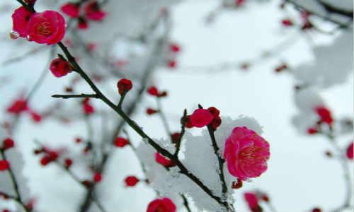 木叶原创现代散文诗歌-世间万物不及你