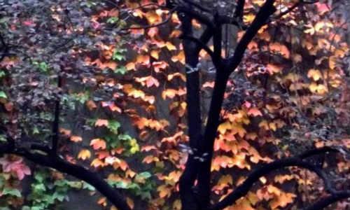 现代诗歌-秋雨下的冤魂