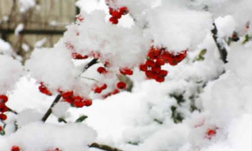 记尚仁在魔都相遇的二零一八年第一场雪,叙旧陈述篇