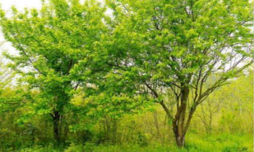 亚君原创现代诗歌两首-树、勇气