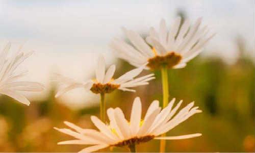 亚君现代诗歌原创两首-晴天、灯