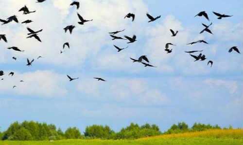 亚君现代诗歌投稿作-天空飞过的鸟儿
