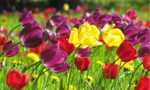 描写春天的现代诗歌-描春