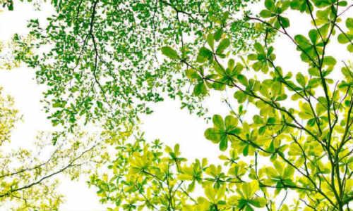 林拙拙原创现代诗歌三首-早春里、不语、小异