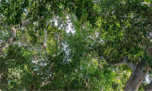 亚君现代诗歌-会唱歌的榕树