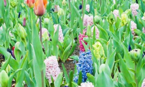 描写春天的现代散文诗歌五首-春在枝头已十分