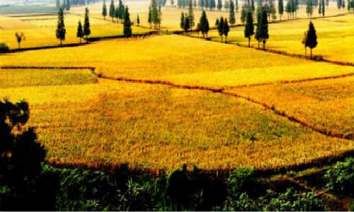 关于描写土地的现代原创诗歌-土地