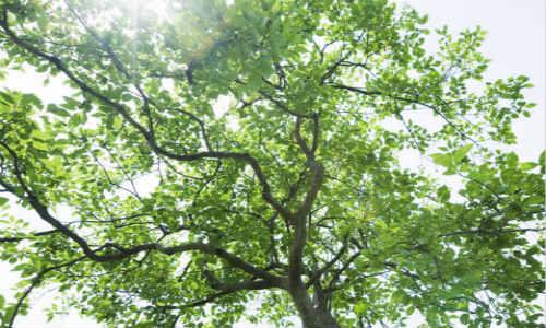 现代诗歌-树的理想
