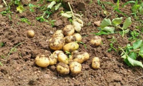 现代散文诗歌两首-云梦、土豆