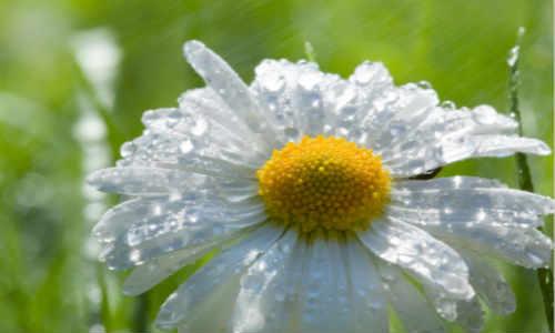 关于春天山坡春雨的现代诗歌-春晨的山坡、春雨