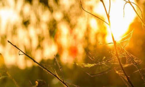 描写阳光的现代诗歌-阳光