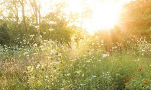 逸然现代诗歌投稿作三首-起风了、在骨里、听说早上有心