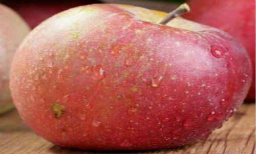 关于描写苹果的现代诗歌-丑苹果