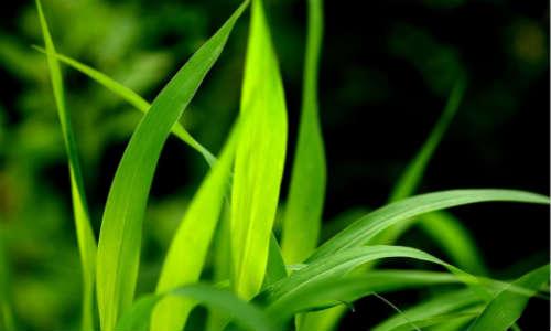 描写草、小草的现代诗歌-小草