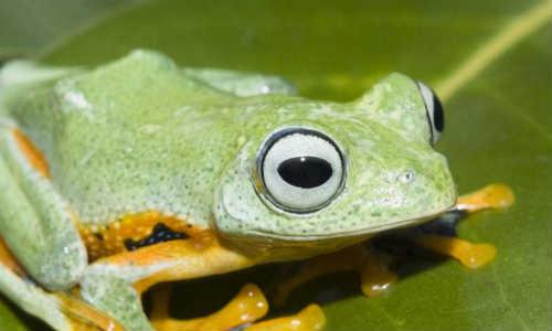祈曲现代诗歌投稿作品-蛙