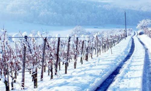 佛宇现代诗词投稿作品两首-归途、冬雪情