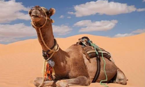 [踏雾] 现代诗歌投稿两首-让我飞跃人间、致骆驼