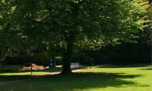 [亚君] 现代诗歌投稿作品三首-站在树下、伞、桂花树