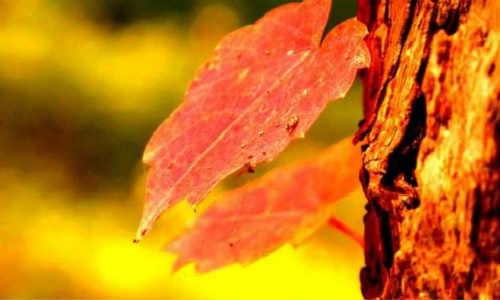 [彦姁] 现代诗歌投稿作品-黑夜的风、追逐、心动、春菊、雨季