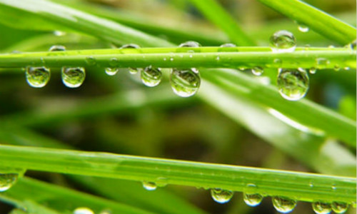 [冯祖稳] 现代诗歌投稿作品三首-这里风景如画、春雨滴滴、抗旱诗歌