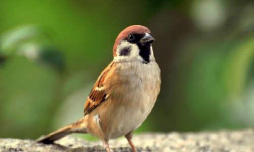 诗歌三首-以徒步的方式丈量、麻雀飞进我的客房、又听青蛙鸣