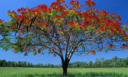 [潇红] 诗歌三首-十五的月、静待花开、树